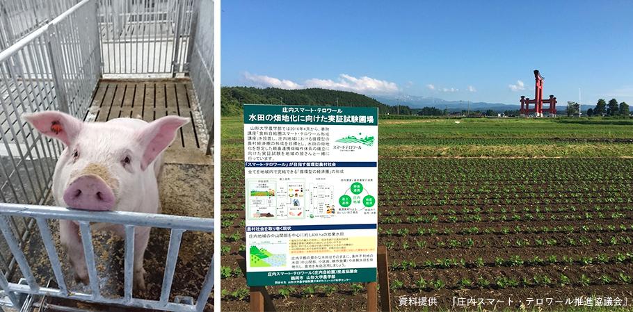 庄内豚と農地の写真